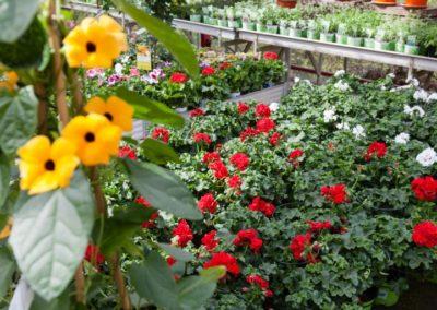Baumschule Langhirt Beet- und Balkonpflanzen