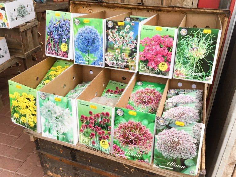 Baumschule Langhirt Blumenzwiebeln