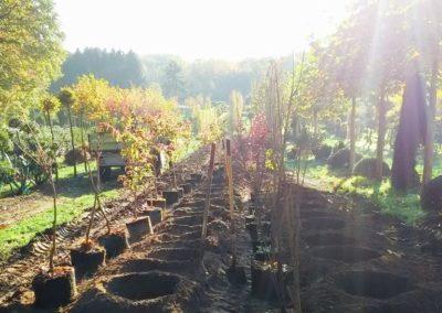 Baumschule Langhirt Freilandkulturen