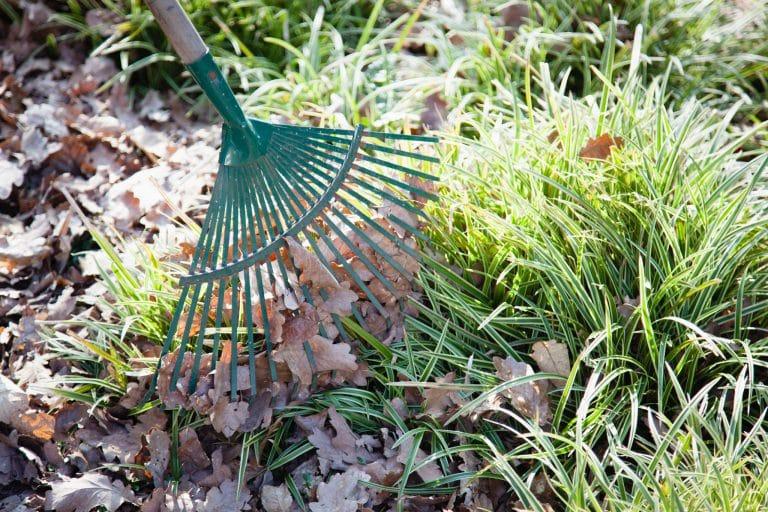 Baumschule Langhirt Gartenpflege