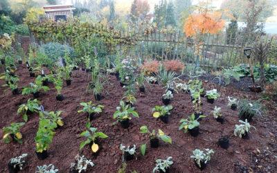 Herbstzeit – Pflanzzeit