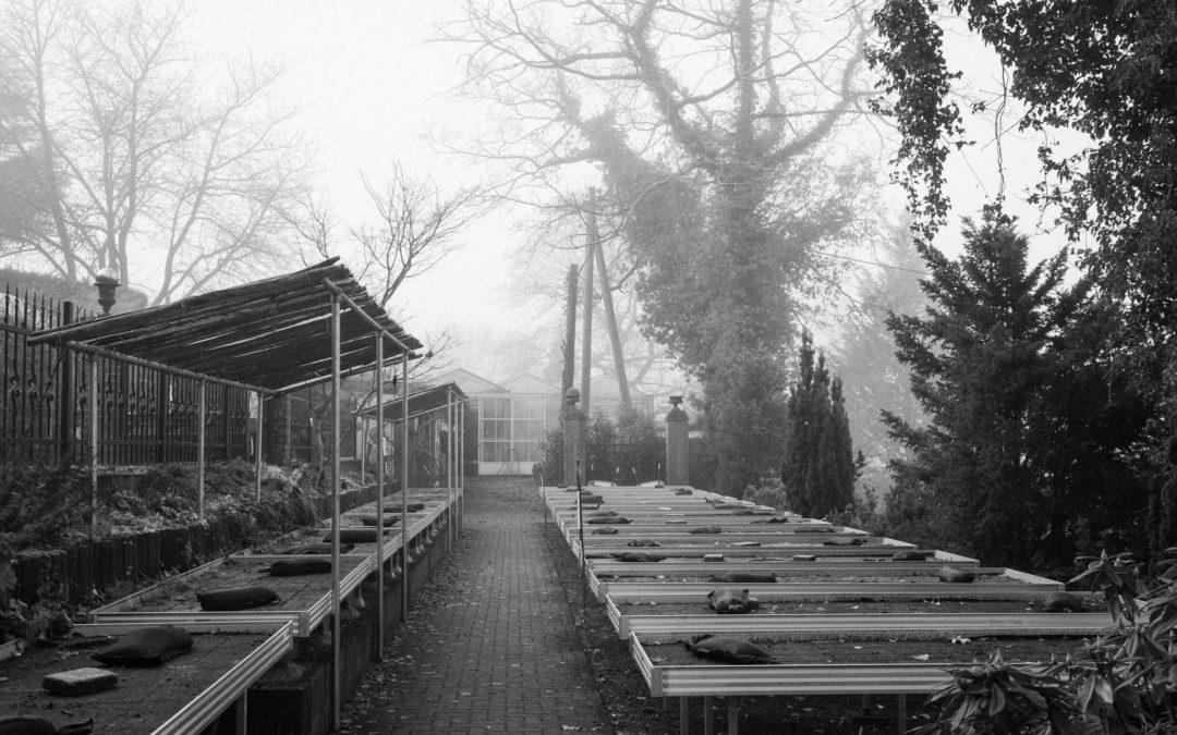 Baumschulbetrieb im Dezember